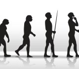 evolution of sales