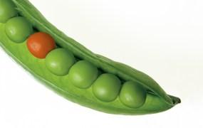 greenrope-bucks-trend