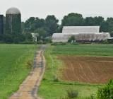 organic farm 2