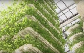 VertiCrop growing trays