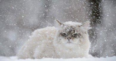 похолодання
