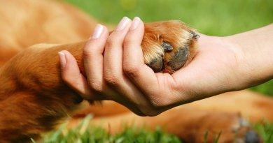 захист тварин