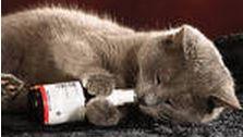 chat et medoc