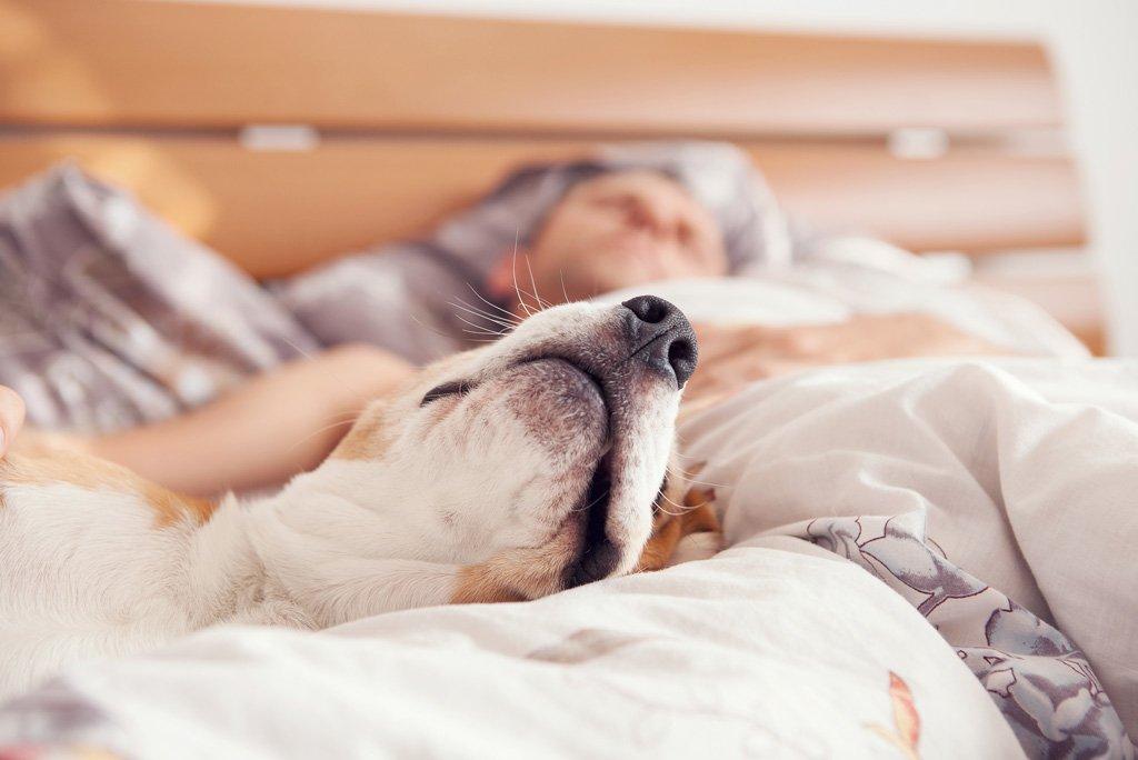 Sleeping With Dogs Promotes Better Sleep Vet Practice