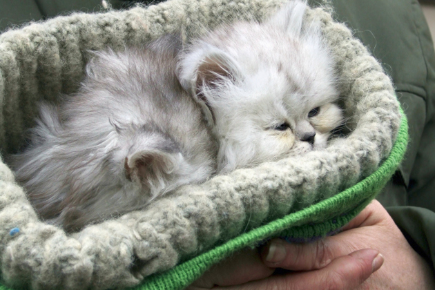 New Cat Owner Guide 9 Steps for Taking Care of Your Kitten