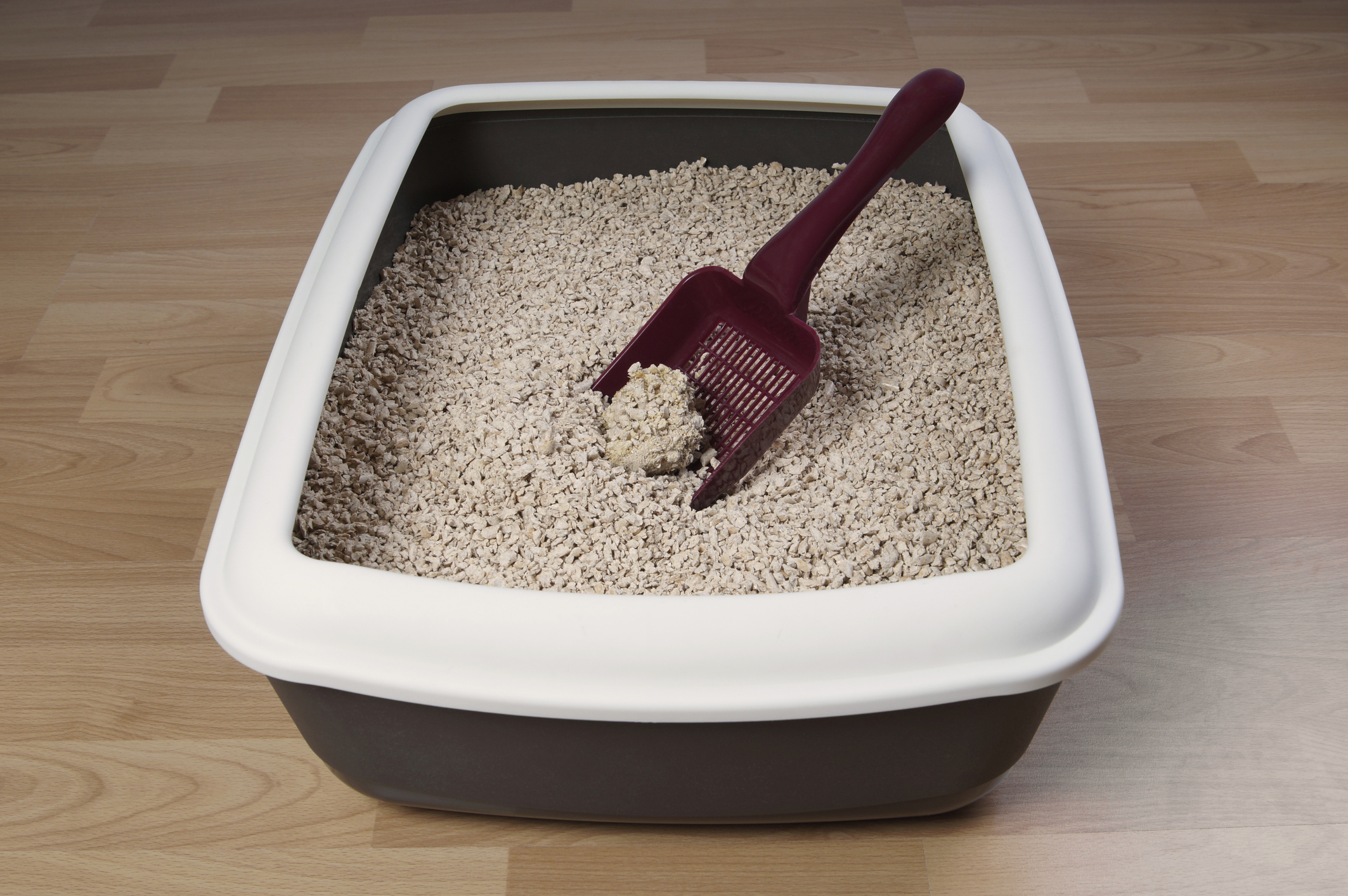 5 Litter Box Mistakes Youre Probably Making