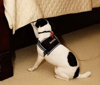 Meet The Dogs That Detect Bed Bugs