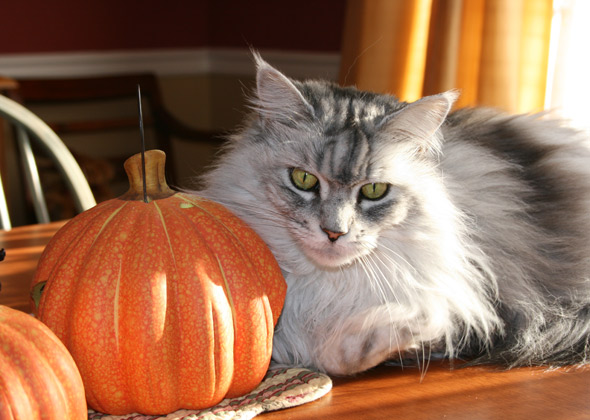 Cute Pumpkin Halloween Wallpaper 10 Cats And Dogs Who Don T Want Fall To End