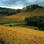 Roteiros personalizados no Brasil e Serra Gaúcha: novidade no Viajando