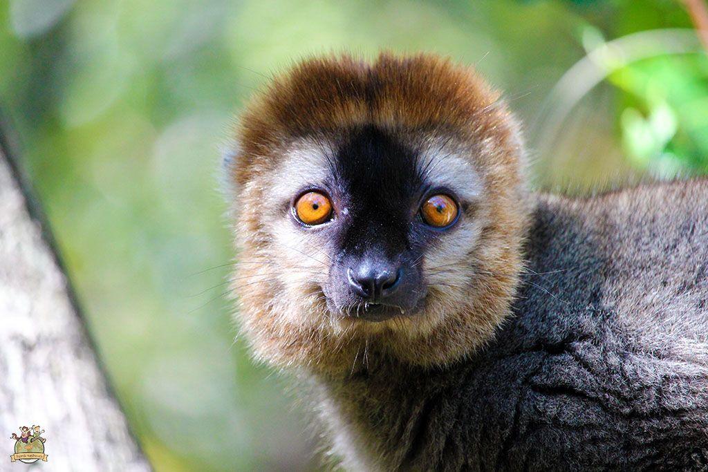 viajar a Madagascar