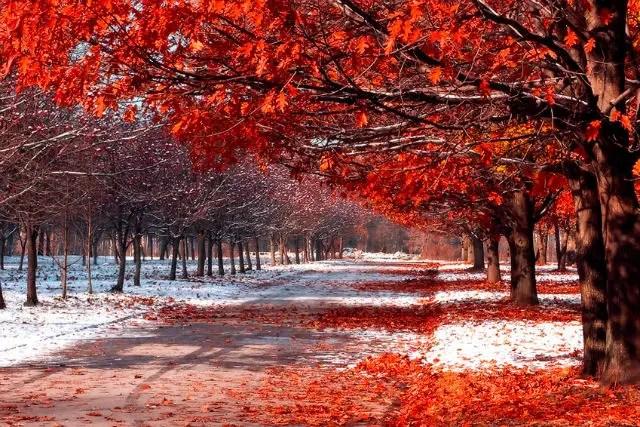 Tree With Leaves Falling Wallpaper Canad 225 Un Pa 237 S En El Extremo Norte De Am 233 Rica