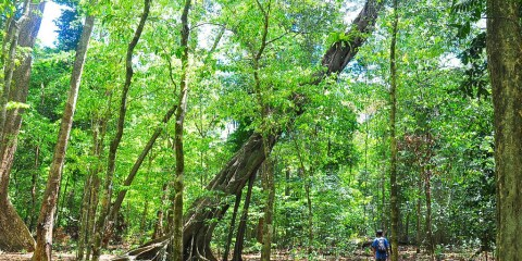 Parque nacional de Ujung Kulon