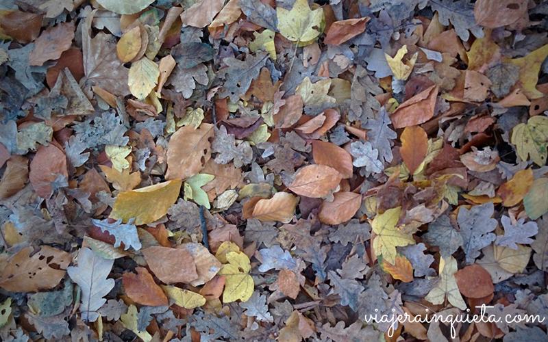 otoño en alemania-2