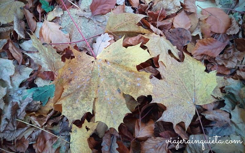otoño en berlin-7