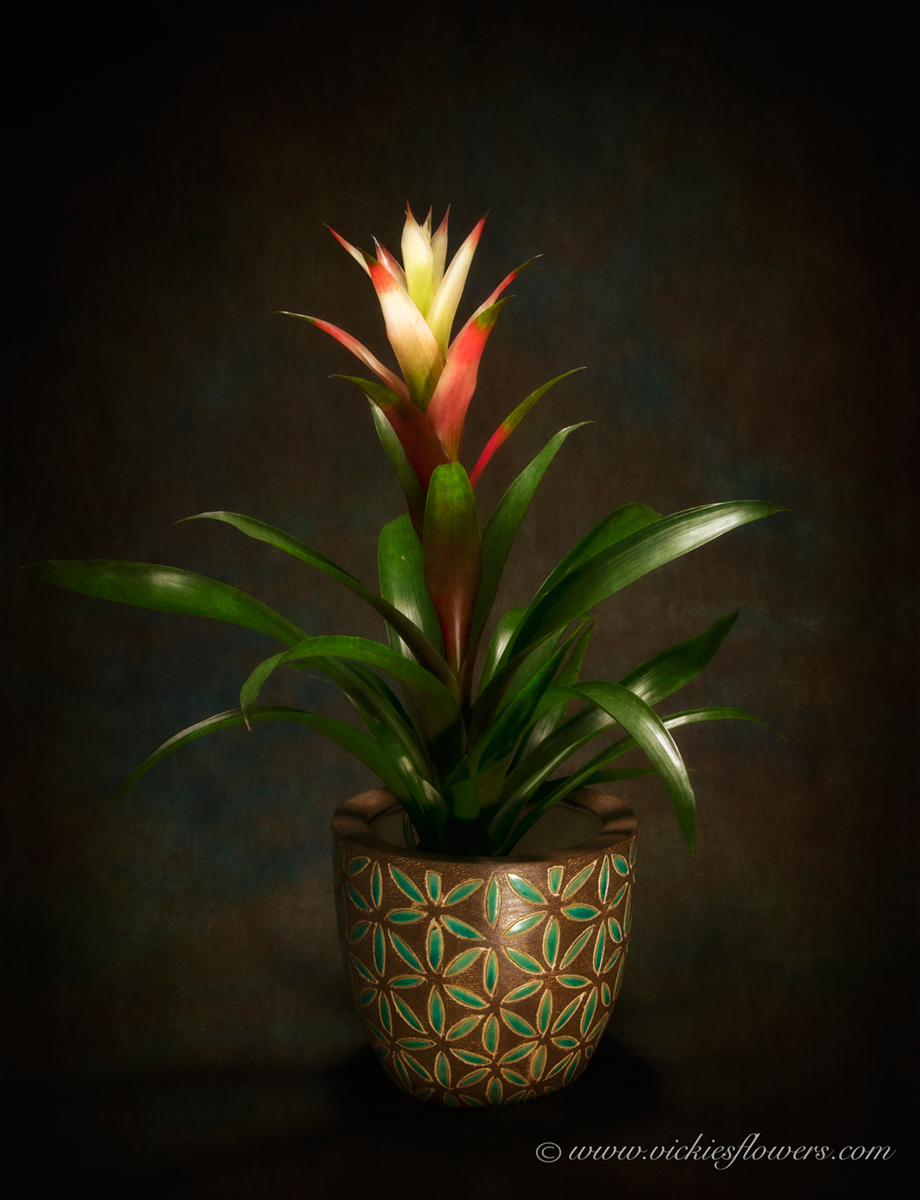 Where To Buy Indoor Plants Online Indoor Plants For Home Office Green Plants Vickies Flowers