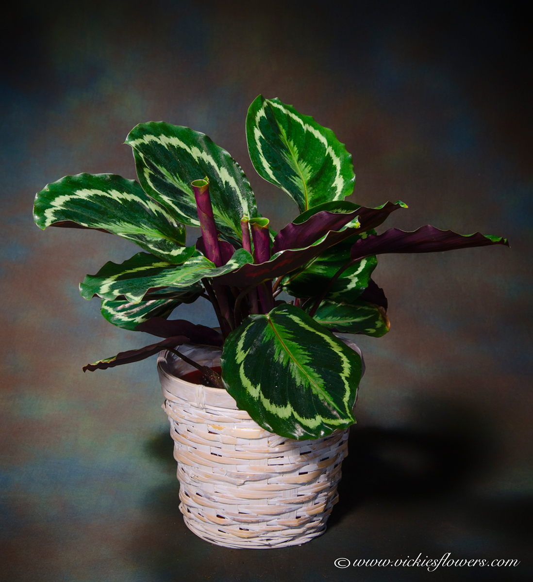 Indoor Plants For The Office Indoor Plants For Home Office Green Plants Vickies Flowers