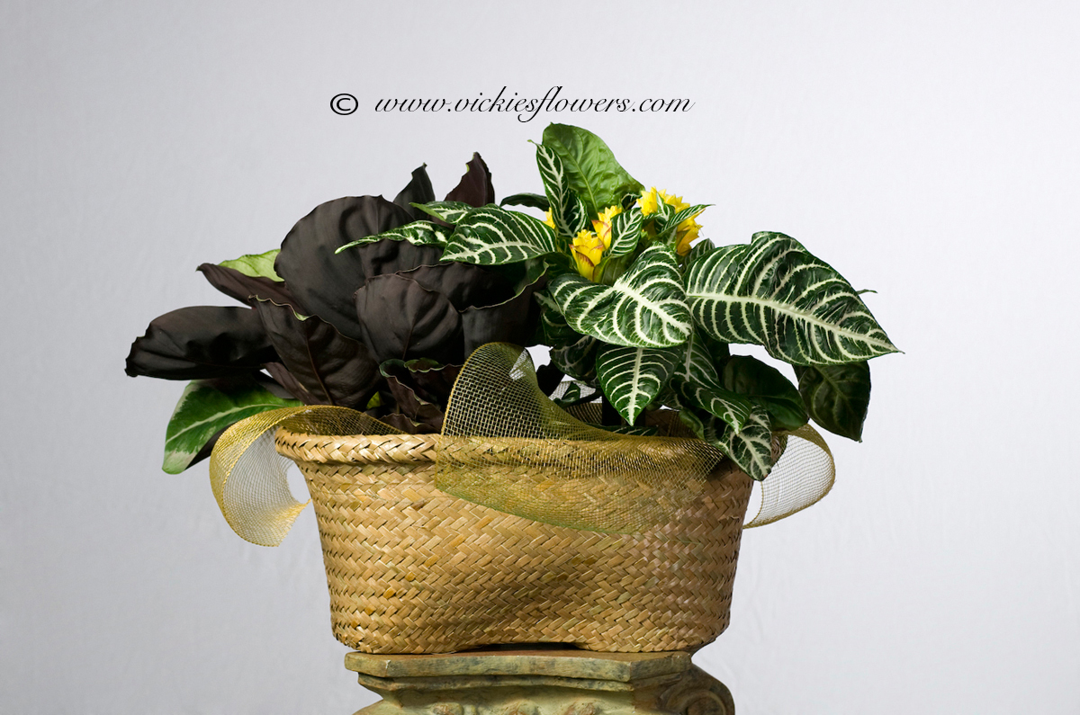 Small House Plants With Flowers Indoor Plants For Home Office Green Plants Vickies Flowers