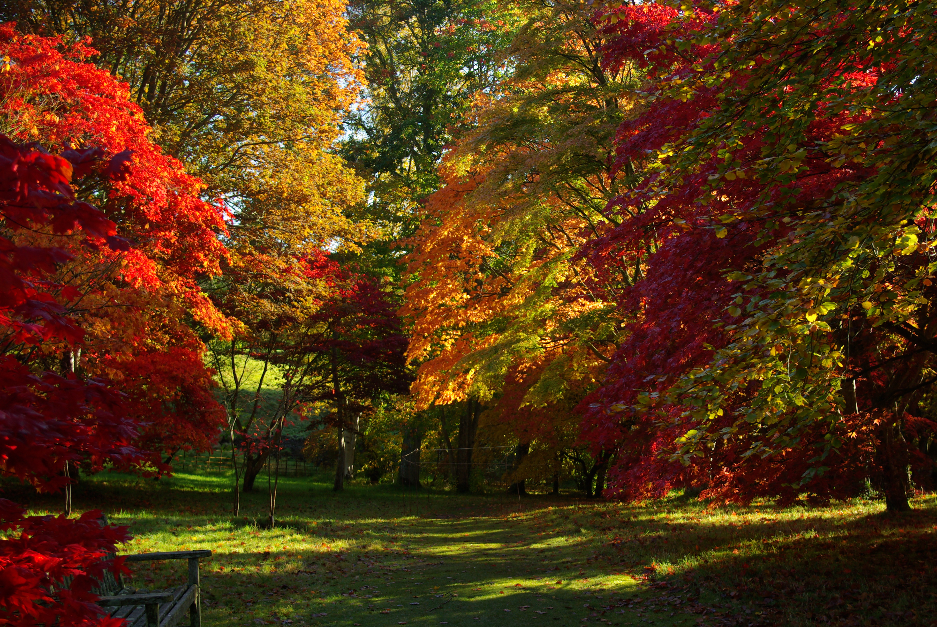 Fall Foliage Computer Wallpaper Autumn Colour At Bodnant Gardens North Wales Everything