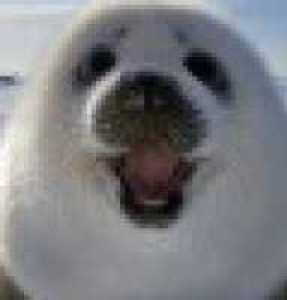 Ювелирные 3D принтеры