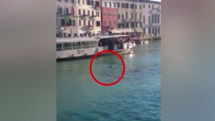 Labourer drowns in canal: Latest News, Videos and Photos ...