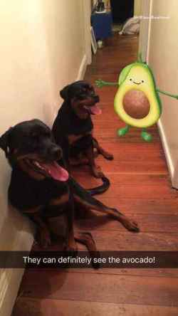 Small Of Avocado And Dogs