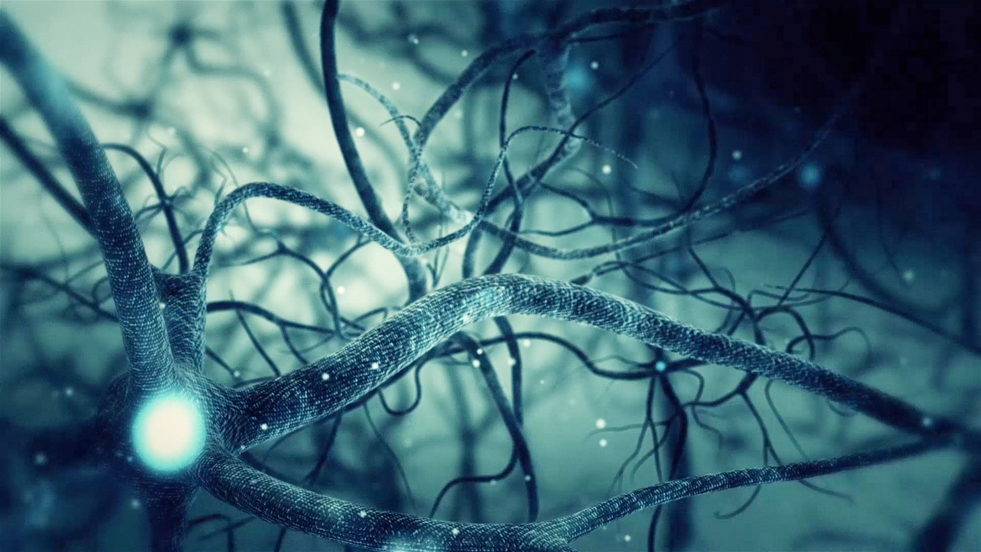 3d Moving Animation Wallpaper Download Green Neuron Synapse Network 3d Animation Infinite Loop