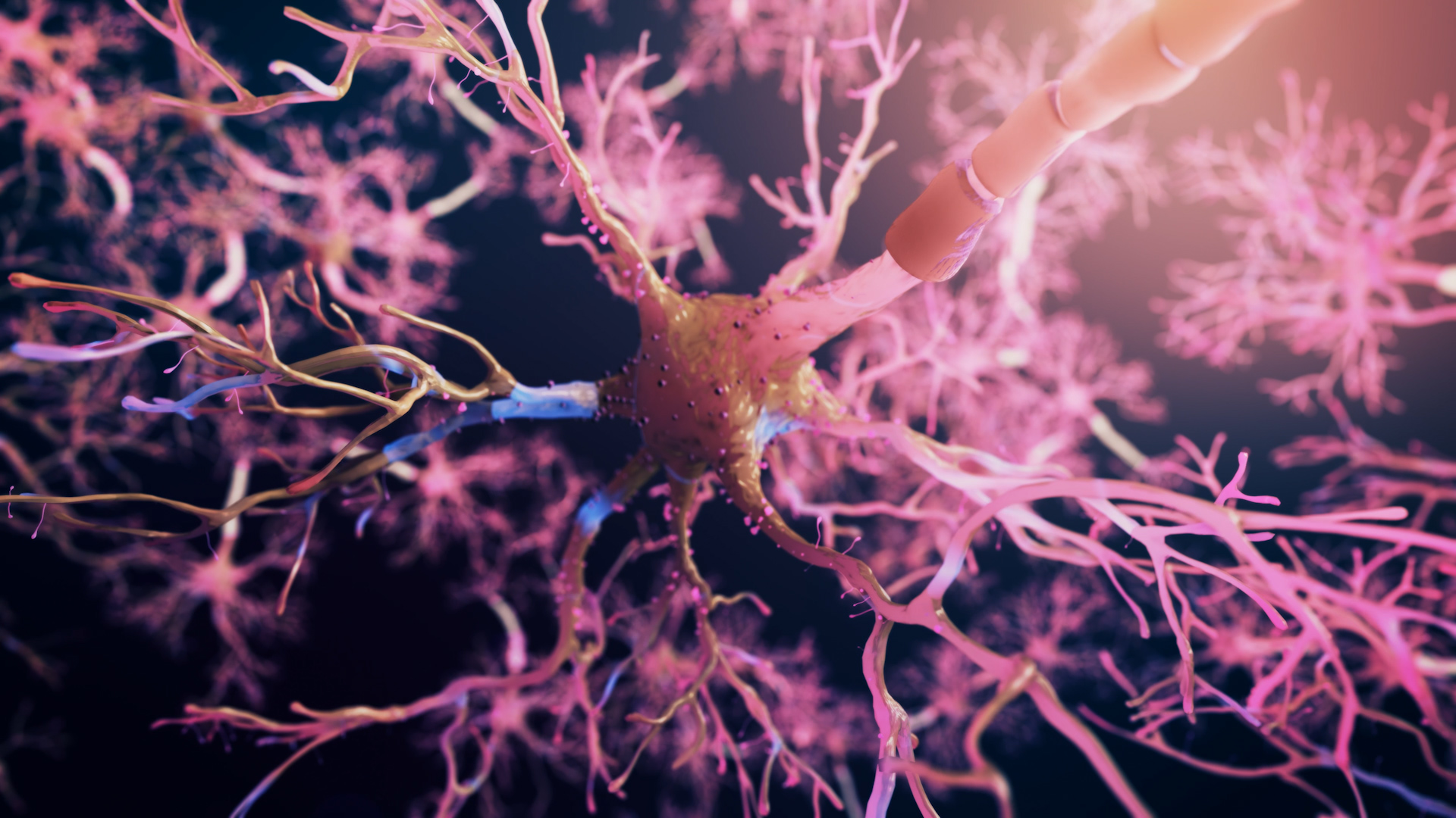 Medical Wallpaper Hd Real Neuron Synapse Network 3d Animation Flight Through