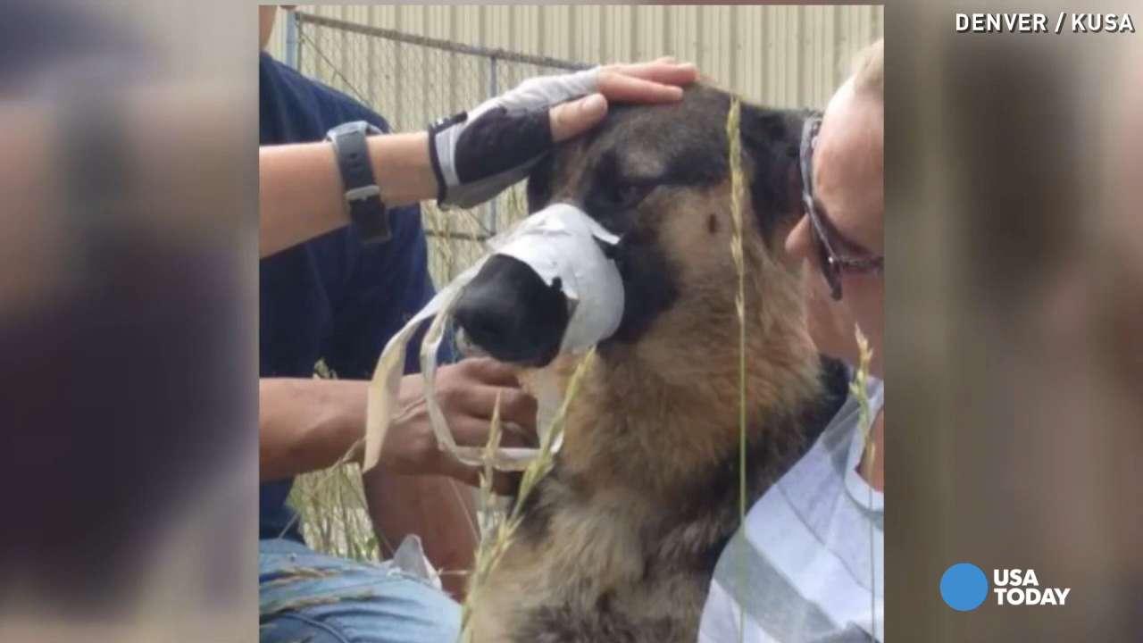 Fullsize Of Dog Rescue Videos