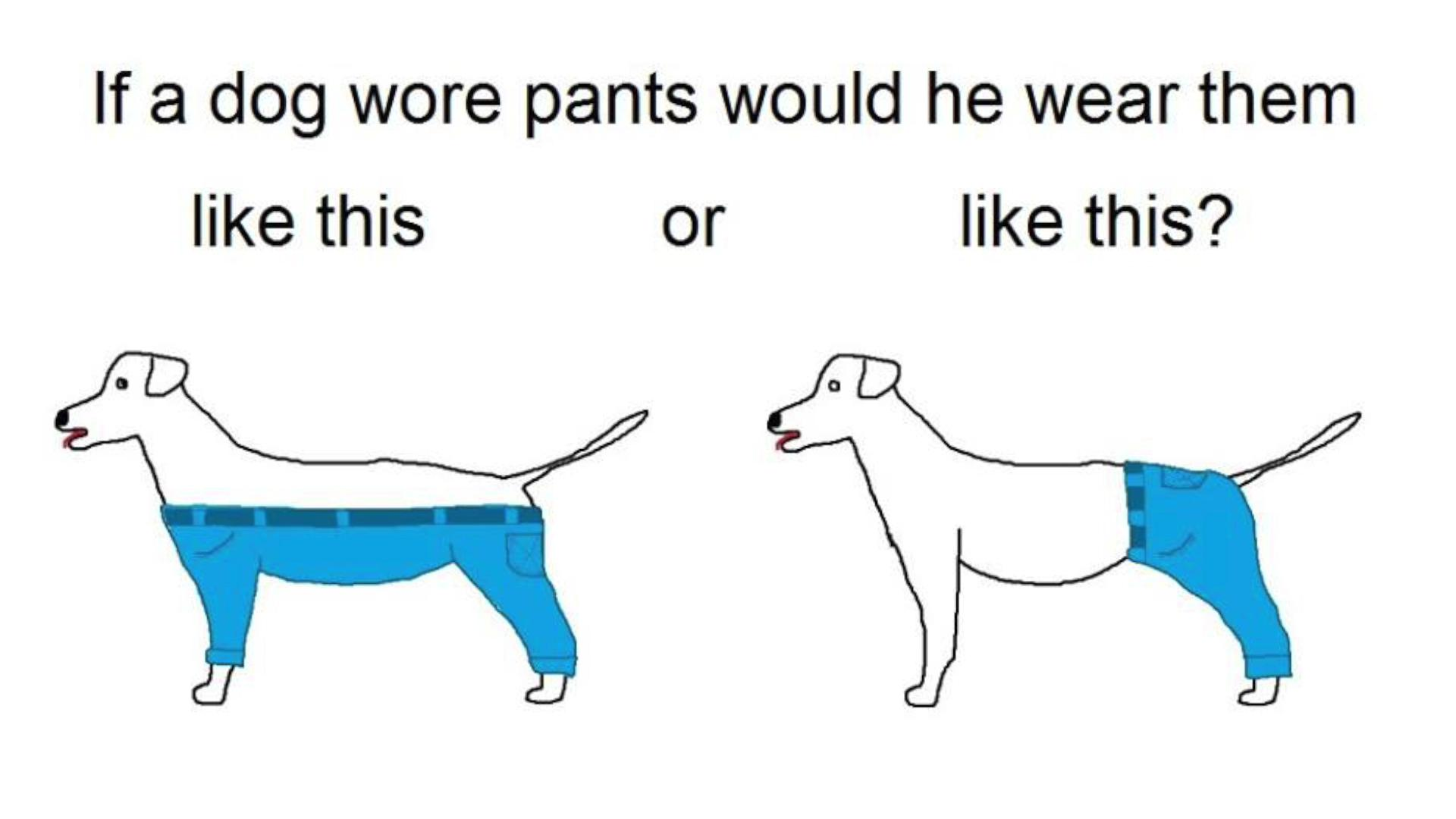 Fullsize Of If A Dog Wore Pants