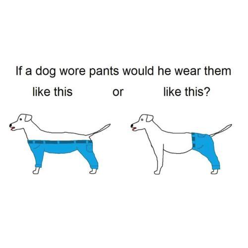 Medium Crop Of If A Dog Wore Pants