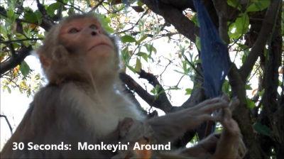30 seconds monkey