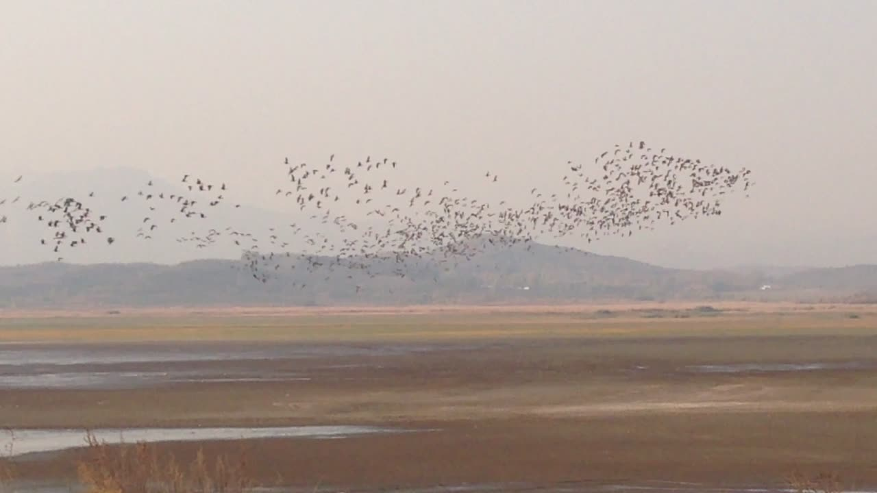 Bean Geese at Miyun, 27 October 2014