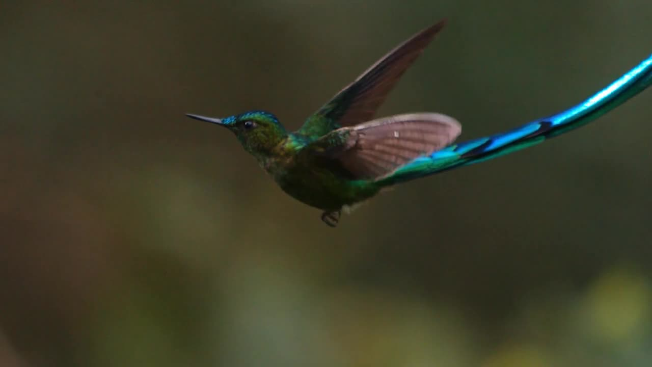 hummingbirds_-_jewelled_messengers_1280x720