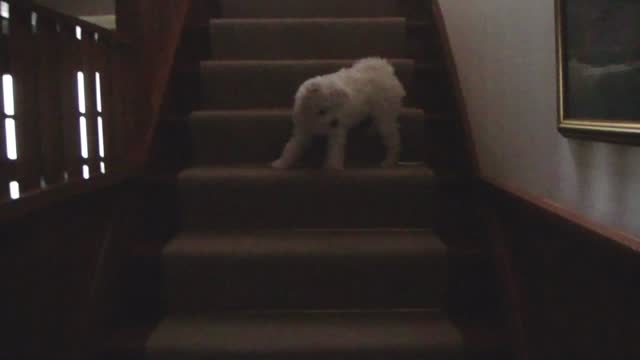 Bella conquers stairs