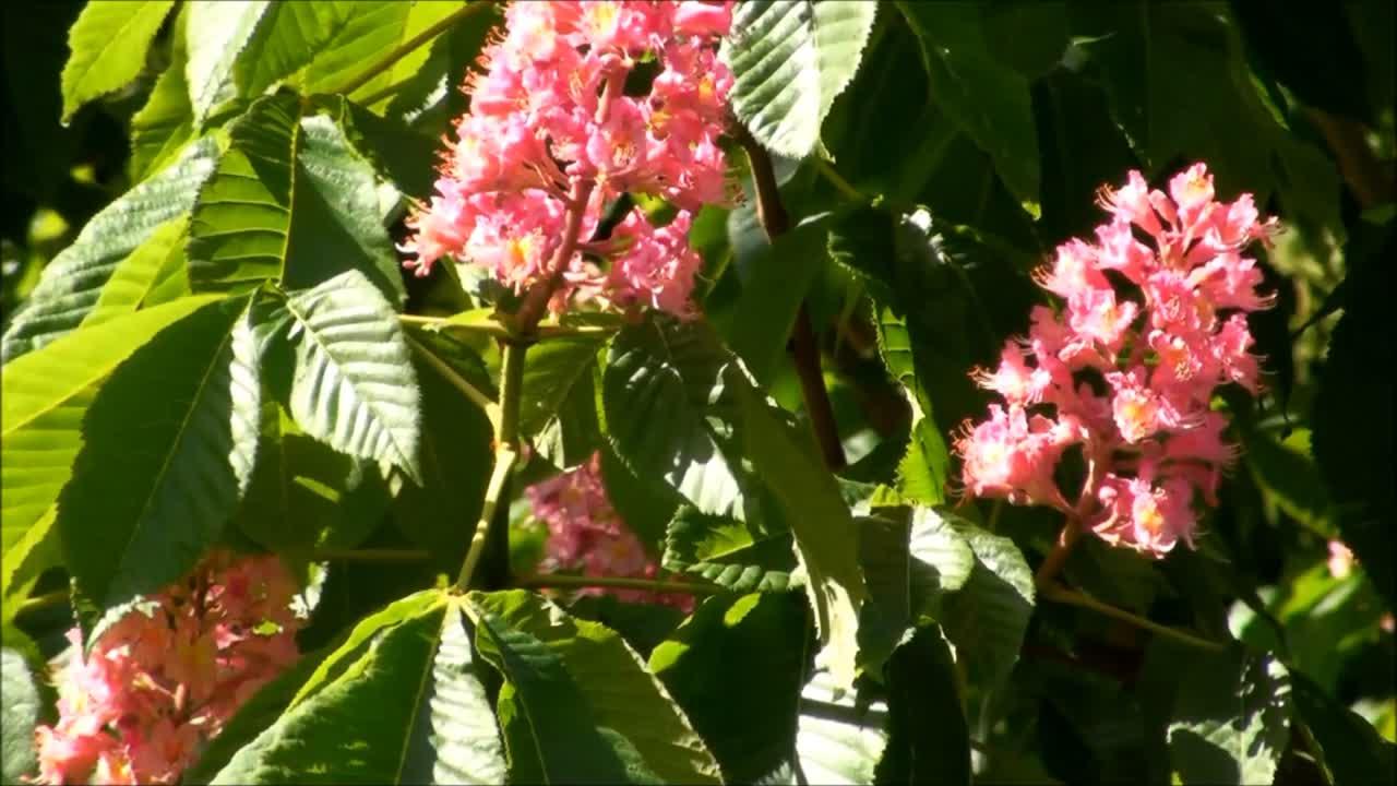 Lluvias de abril, flores de mayo.