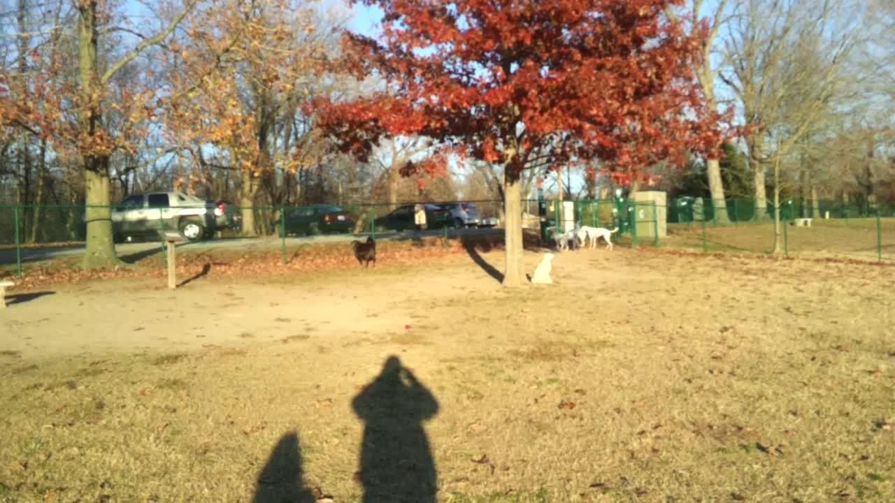 Planet Greyhound Boys at the Dog Park