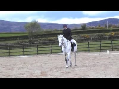 Paddy dressage