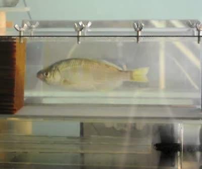 FishwaveMovie1