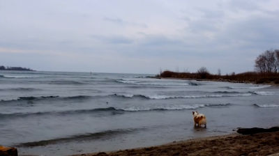 Viggo and the waves