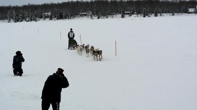 Junior Iditarod