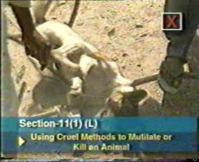 Video: Section 11 of the Indian Prevention of Cruelty to Animals Act 1960