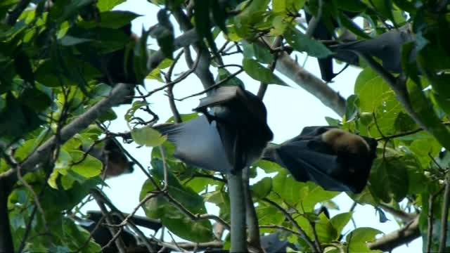 Rainforest Fruit Bats 3