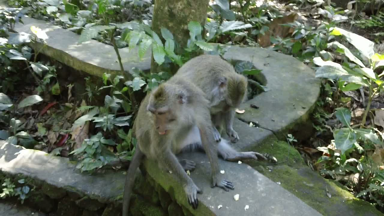 Sacred Monkey Forest: Ubud