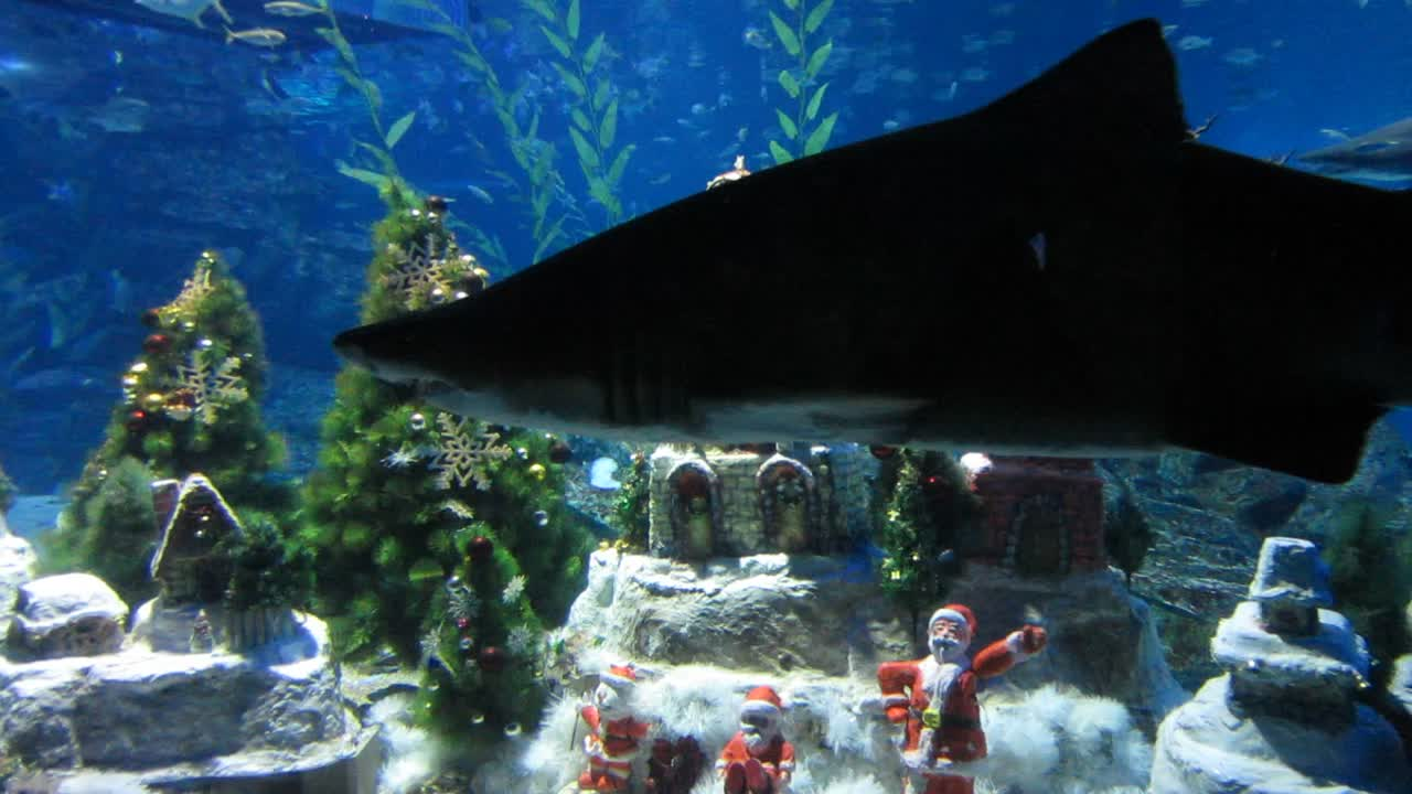 Mommy, what happened to Santa?  Sorry, Billy, he was eaten by a shark!