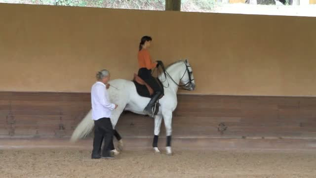Schooling Piaffe and Passage in Brasil!