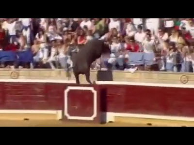 Video  Bull escapes ring and charges into stands   World news guardian.co.uk