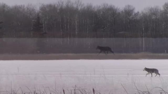 Wolf and Bison Lake Audy Dec 09