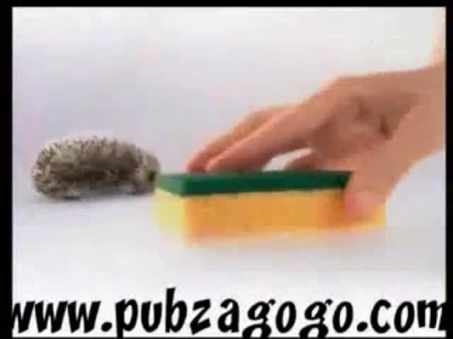 Sponge ad France