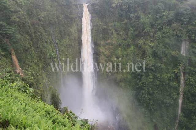 Wild Akaka Falls