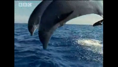 Dolphins and humans – BBC